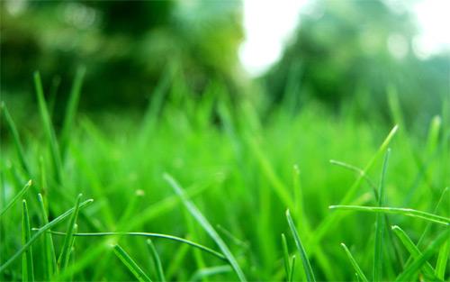 grass refresh
