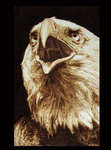 """""""Falconiformes"""" - pyrography by Davide Della Noce"""