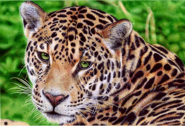 """Jaguar"" - Ballpoint Pen Artwork by Samuel Silva"