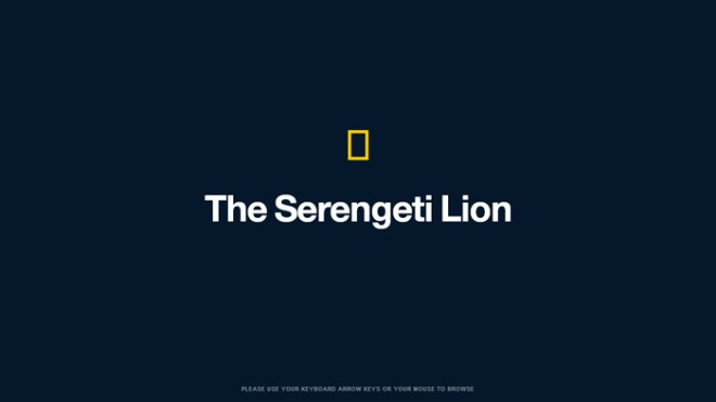 National Geographic | Serengeti Lion