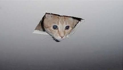 ceiling-cat (1)
