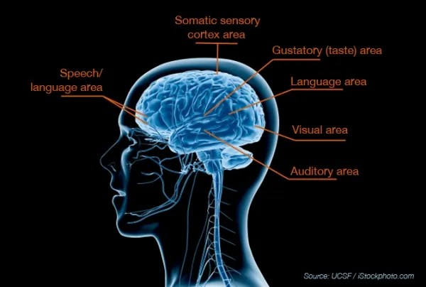 Breakthrough Study Reveals Biological Basis for Sensory Processing Disorders in Kids