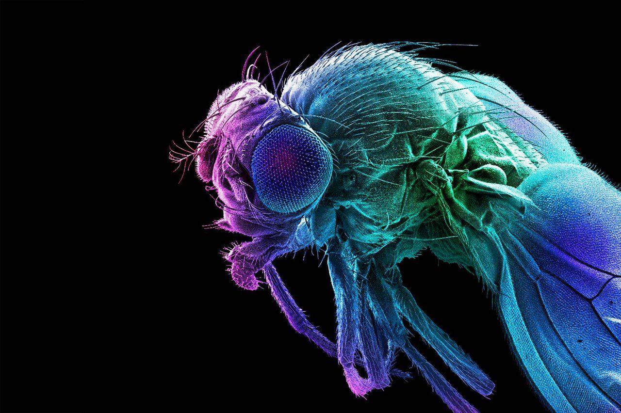 Astonishing Animals That Illuminate Human Health