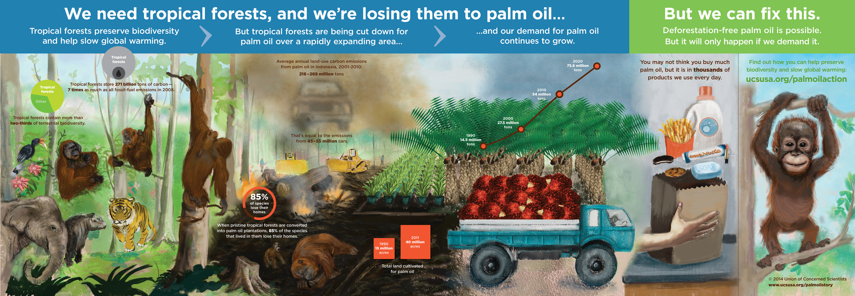 Palm-Oil-2-6-14-2216px-1.jpg (3000×1040)