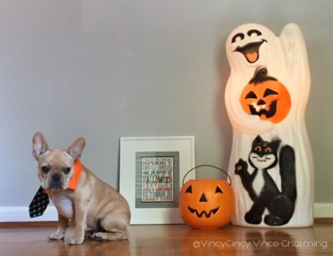 French Bulldog Halloween | vincecincy.com