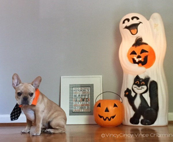 french bulldog halloween vincecincy.com