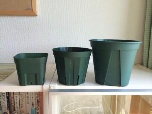 アデニウム鉢の選び方