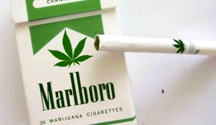 marlboro marihuana