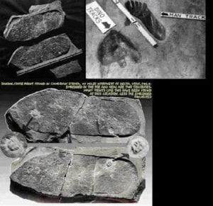 A Shoe Footprint Over 200 Million Years Old