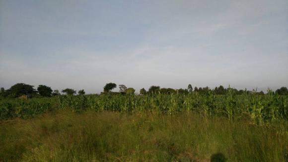 farm6