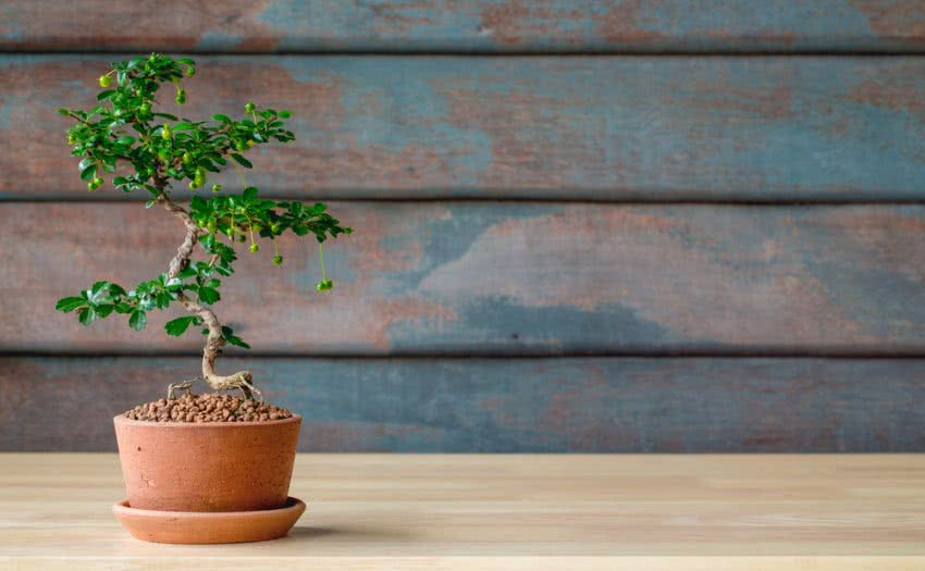 The Art of Bonsai এর ছবি ফলাফল