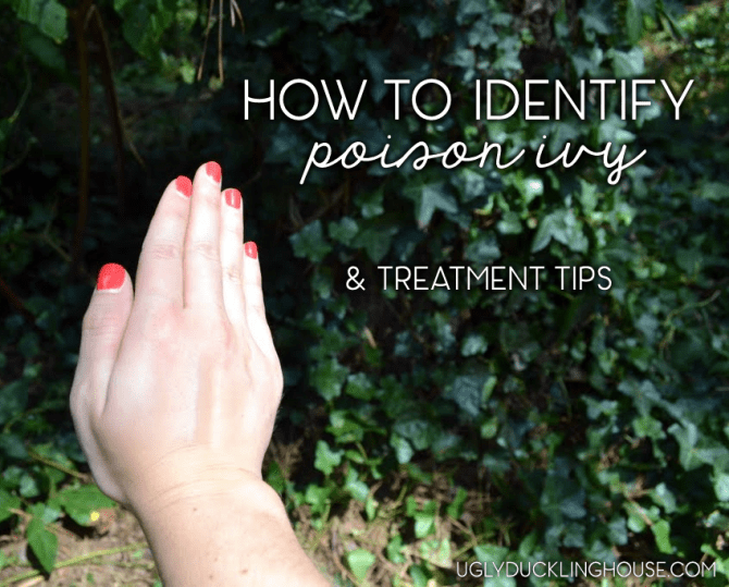 how to identify poison ivy and treatment tips