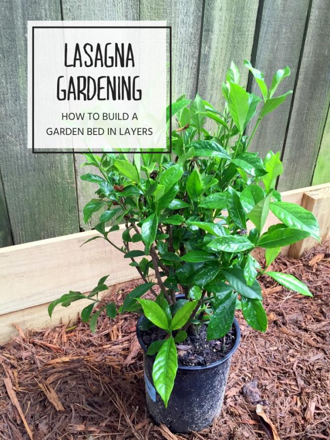 gardenia lasagna gardening 2