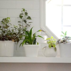 Laundry Room Greenhouse: How to Drill Through Ceramic Pots