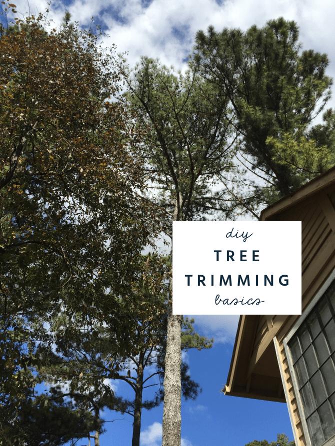 diy tree trimming basics
