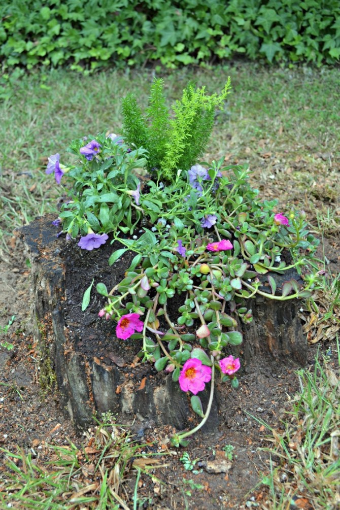 top view cascading stump planter diy