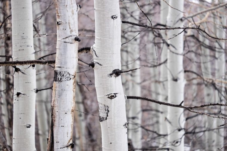 Aspen Grove, La Sal Mountains, UT