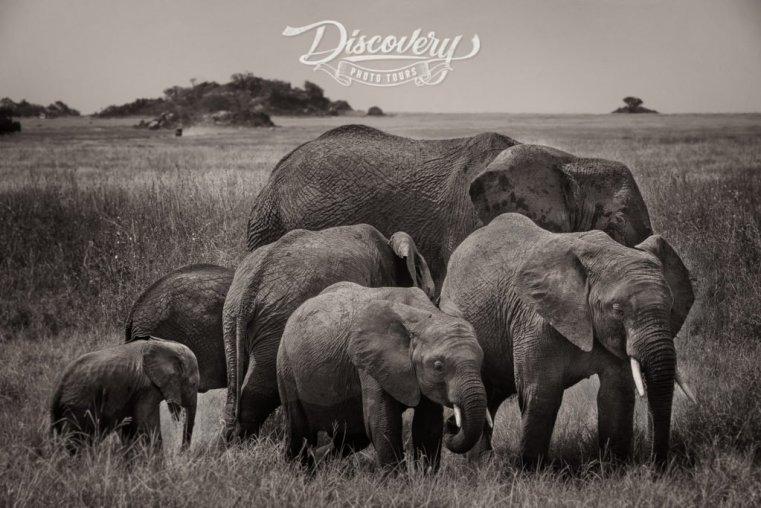 Family of elephants, Tanzania