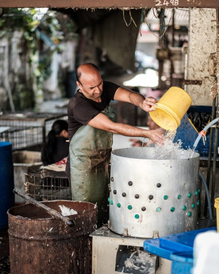 Stewing ducks, Penang, Malaysia