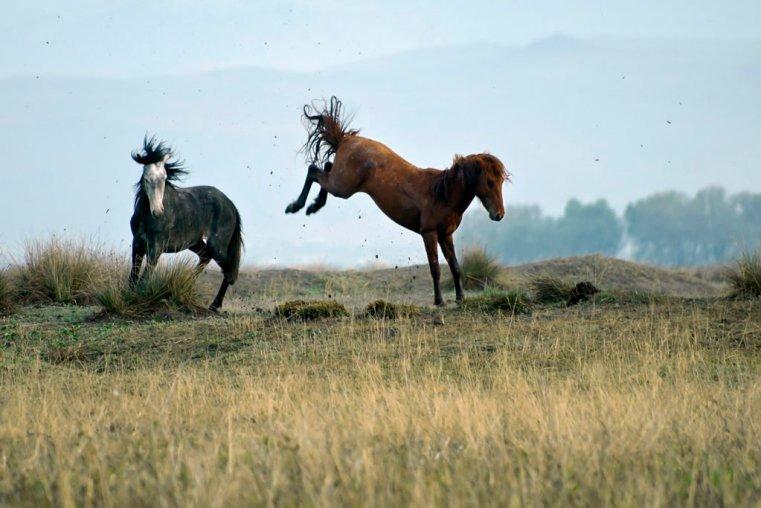 Wild horses, Cappadocia
