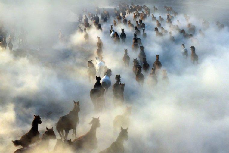 Herd of wild horses, Cappadocia