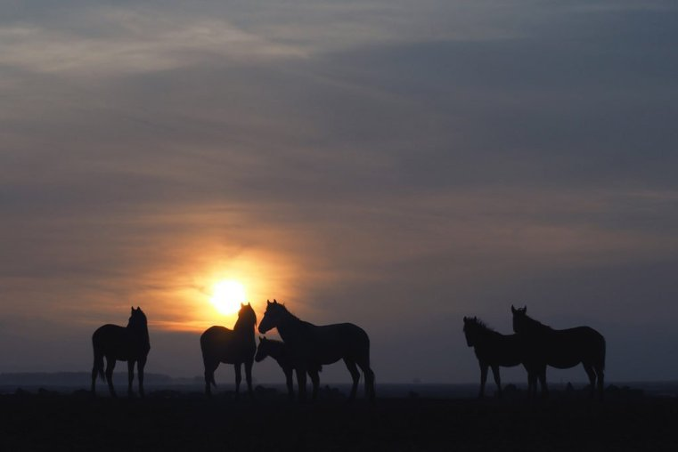 Herd of wild horses at sunset, Cappadocia