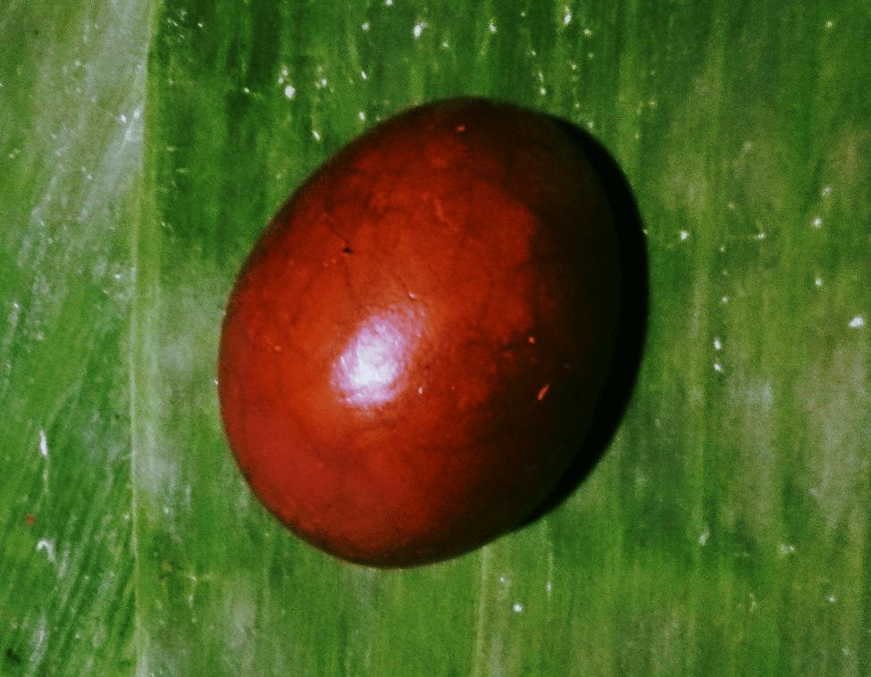 jajko herbaciane