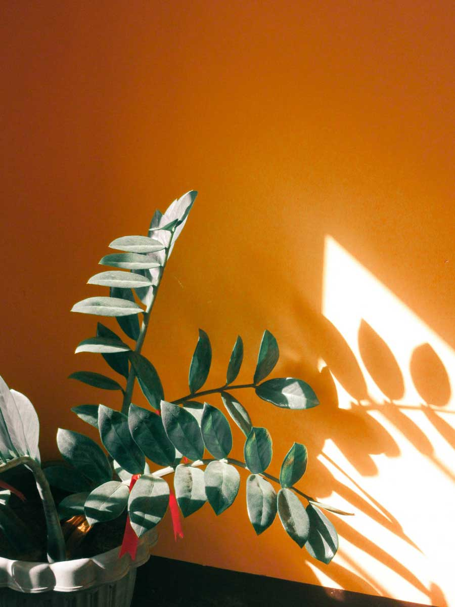Orange- Grün