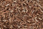 Organic Palmarosa Oil