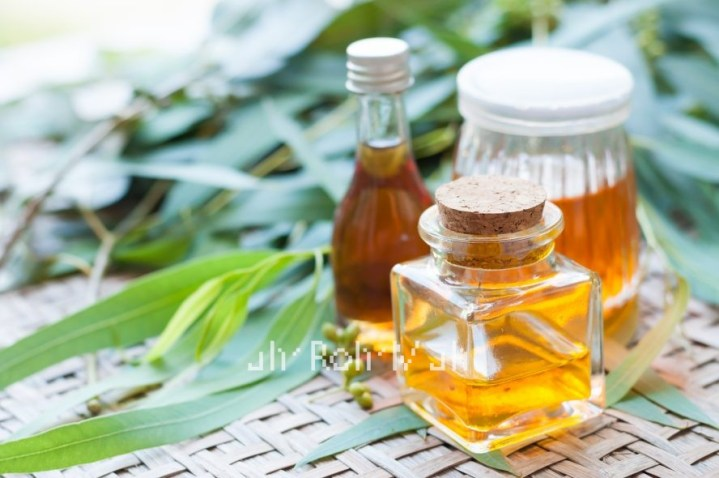 Organic Eucalyptus Globulus Oil