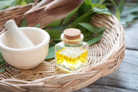 Organic Eucalyptus Radiata Oil