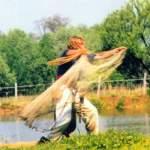 Dobóhálós halászat