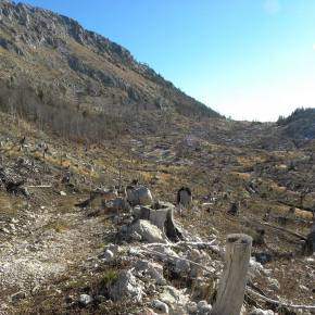 Deforestation in Munella, Albania