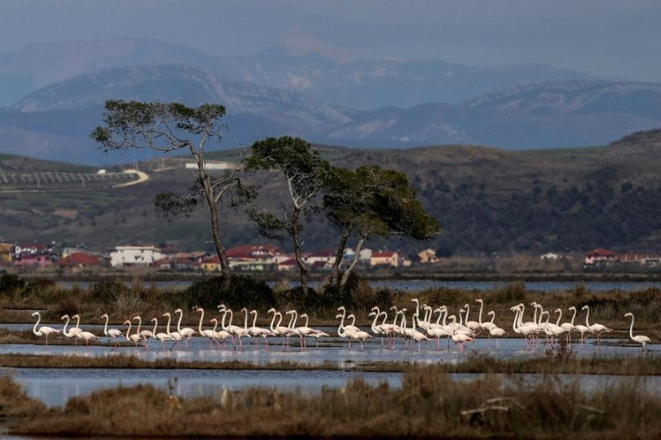 There are 200 species of birds which inhabit or visit the lagoon, including at least 1,500 greater flamingos. (AFP)