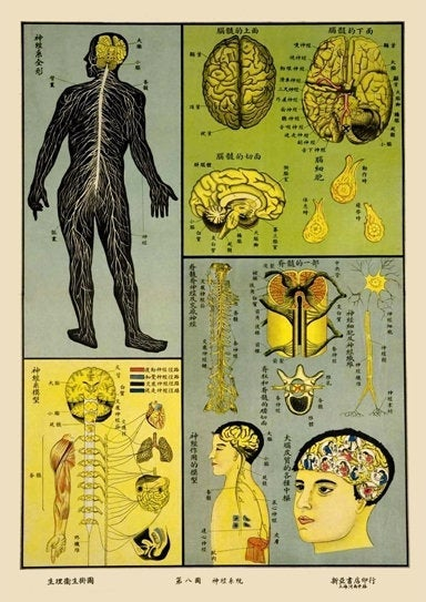 1930's Chinese Medical Chart Of The Central Nervous System Illustration A3 Poster Reprint