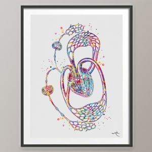 Lymphatic Circulation Watercolor Print Medical Art Clinic Office Decor Wall System Circulatory Heart Anatomy Gift-699