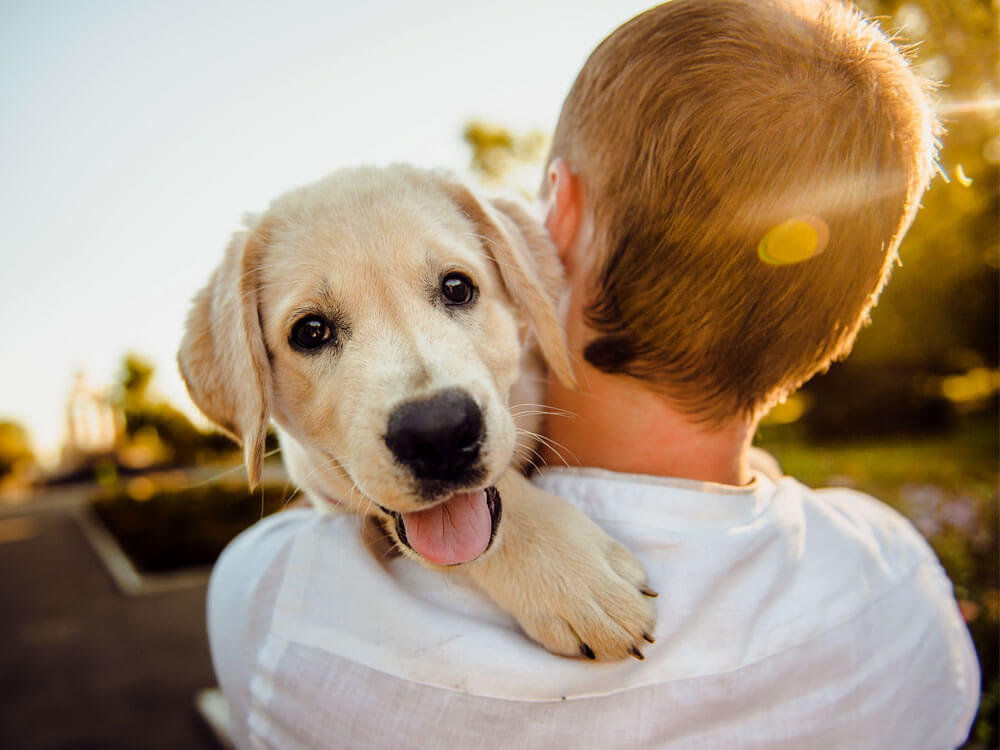 Answered What Is The Best Dog Breed For Me Uk Pets