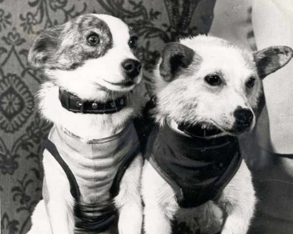 Laika the Space Dog and Other Animals Launched into Space ...