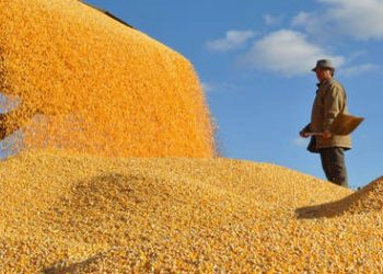 أوكرانيا قد تضاعف واردات البذور ثلاث مرات