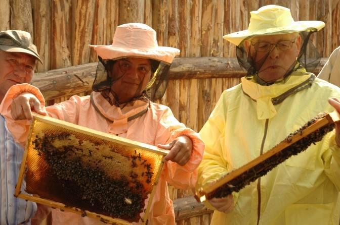 كيف يغزو العسل الأوكراني العالم وما هو الخطأ فيه؟