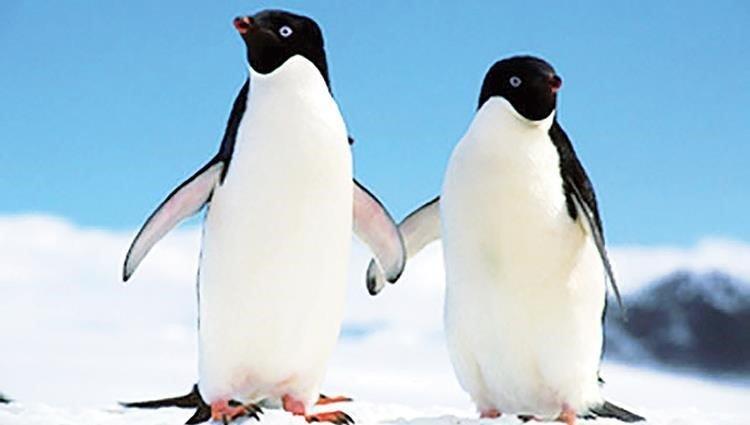 لماذا علينا حماية طيور البطريق و الأهتمام بها؟