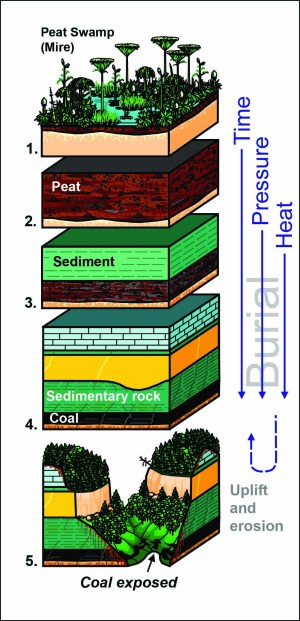 Coal, Kentucky Geological Survey, University of Kentucky