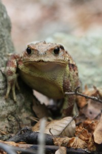 A toad menacingly guards against intruders