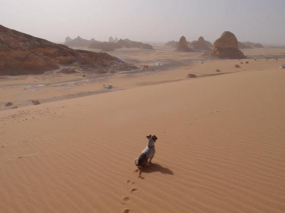 My brother's dog, Gogi, who was abandoned on the streets in Korea, and has accompanied him to Egypt, and soon will join him in Sweden.