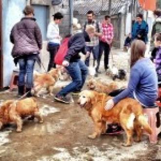 Volunteers on the weekend Dog Walk