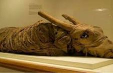 """Bbc denuncia la """"truffa"""" delle mummie degli animali"""