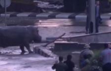 Inondazione travolge zoo di Tblisi. Bestie feroci in fuga, 12 morti