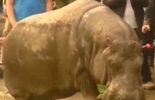 10 morti in Georgia per un'inondazione che favorisce la fuga degli animali dello zoo di Tblisi