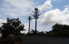 Se le inventano di tutte: le antenne telefoniche camuffate da alberi