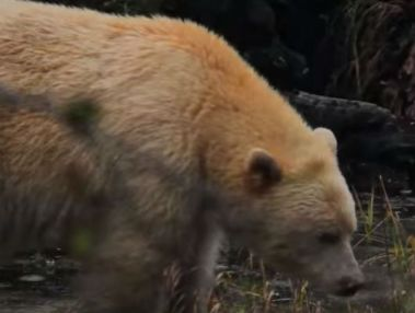 orso canada